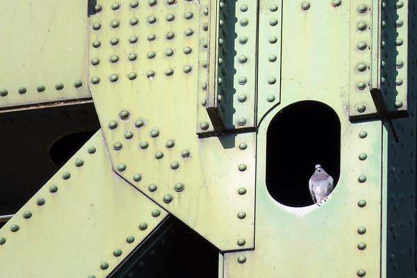 December 24 2015 - Industrial Pigeon