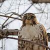 December 2 2105 - Hawk
