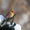 February 15 2015 - Cardinal