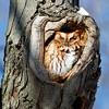 February 16 2015 - Owl
