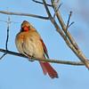 February 7 2015 - Cardinal