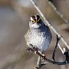 February 12 2015 - Sparrow