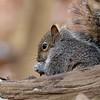 February 24 2015 - Squirrel
