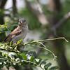 July 13 2015 - Sparrow