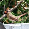 July 6 2015 - Cardinal