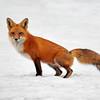 March 18 2015 - Fox