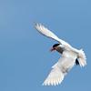 May 20 - Tern