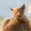May 24 2014 - Fox Cub