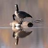 November 12 2015 - Geese Island
