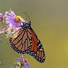 September 23 2015 - Monarch