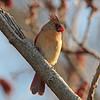 January 20 2016 - Cardinal