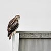 January 23 2016 - Hawk