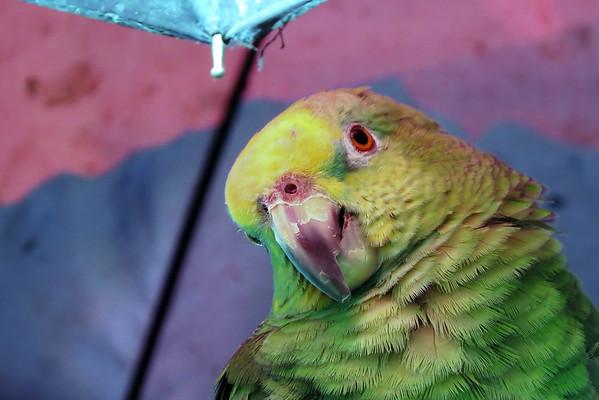 July 11 2016 - Parrot