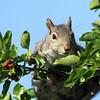 July 20 2018 - Squirrel