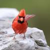 July 31 2016 - Cardinal