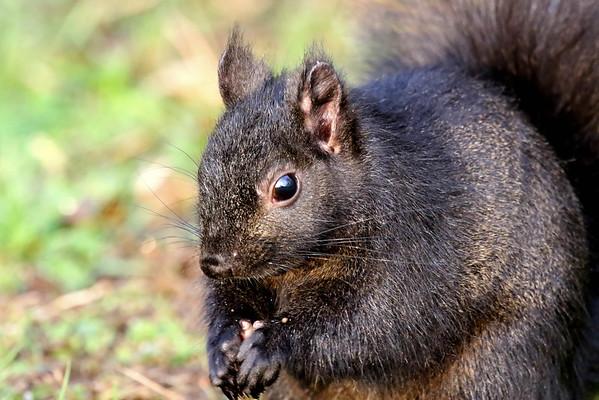 November 28 2016 - Squirrel