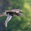 October 5 2016 - Hawk
