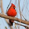 October 11 2016 - Cardinal