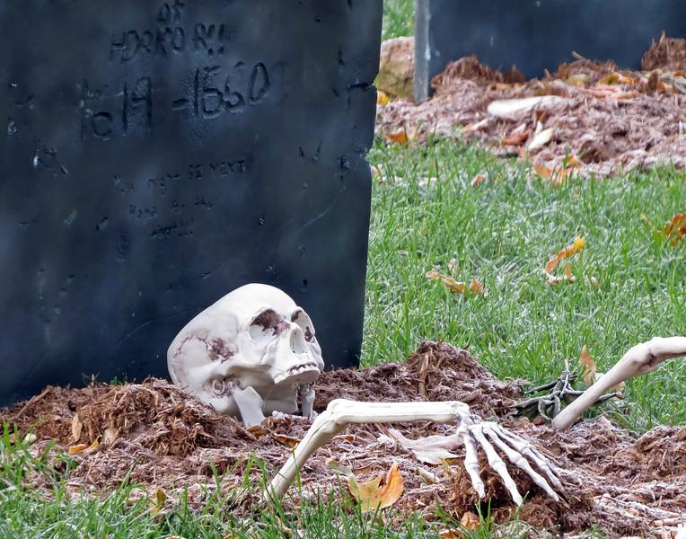 October 31 2016 - Skeleton