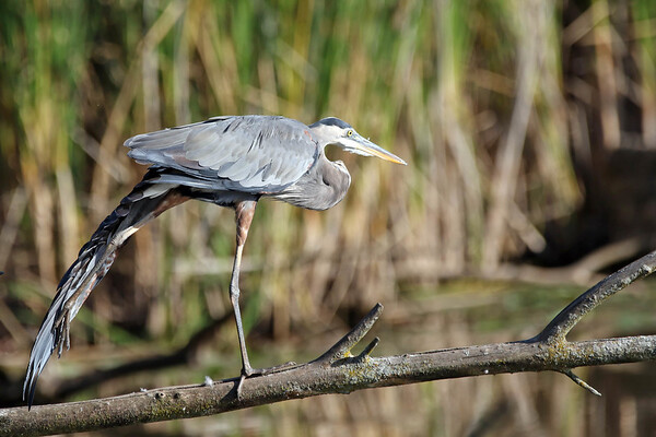 September 24 2016 - Heron Stretch