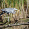 September 24 2016 - Heron Stretch