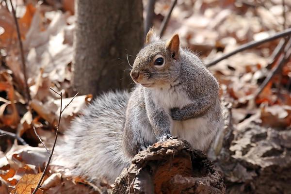 April 2 2017 - Squirrel