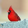 February 28 2017 - Cardinal