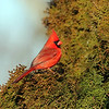 February 18 2017 - Cardinal