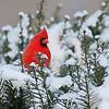 January 1 2017 - Cardinal