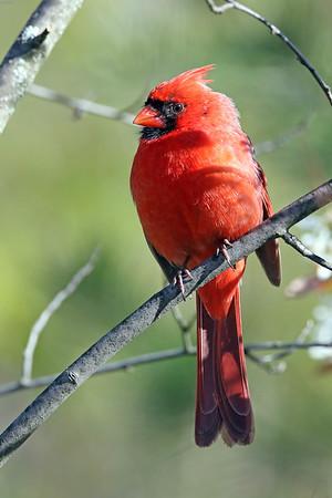 July 1 2017 - Cardinal