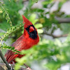 June 18 2017 - Cardinal