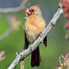 June 1 2017 - Cardinal