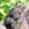 June 2 2017 - Squirrel