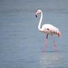 June 9 2017 - Flamingo