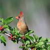 June 22 2017 - Cardinal
