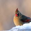 March 18 2017 - Cardinal