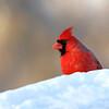 March 19 2017 - Cardinal