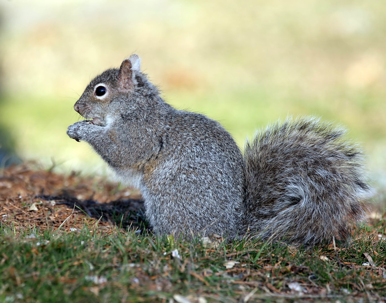 March 10 2017 - Squirrel