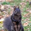 November 14 2017 - Squirrel