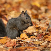 October 14 2017 - Squirrel