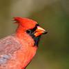 October 20 2017 - Cardinal