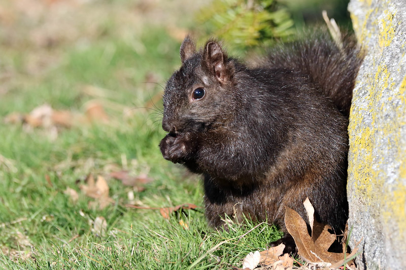April 15 2018 - Squirrel