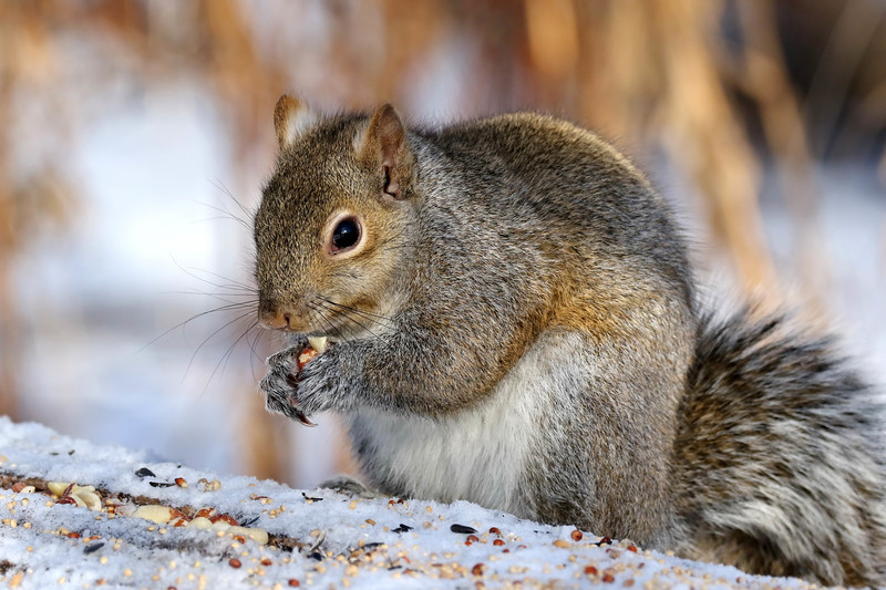 February 25 2018 - Squirrel