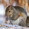 February 25 2018 - Squirrel