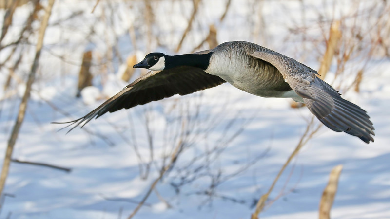 February 28 2018 - Canada Goose