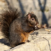 February 10 2018 - Squirrel