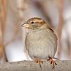 February 14 2018 - Sparrow