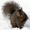 January 16 2018 - Squirrel
