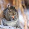 January 21 2018 - Squirrel