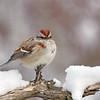 January 5 2018 - Sparrow